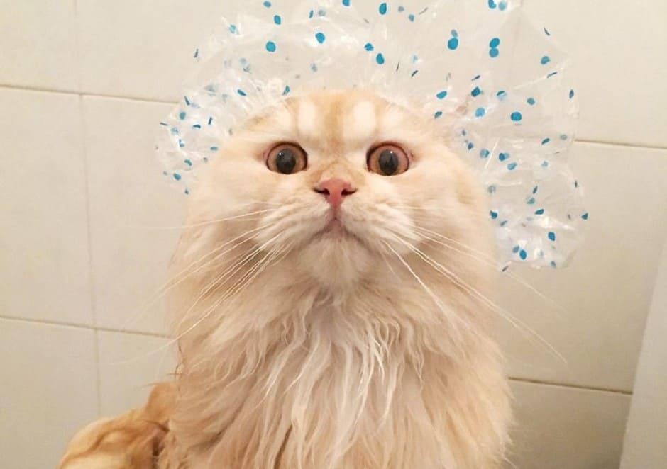 Gatto che si gratta di continuo: igiene e cura